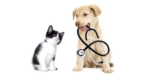 500x254-4-veterinaria